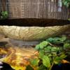 Fonteinschaal glas bruin met goud afgewerkt